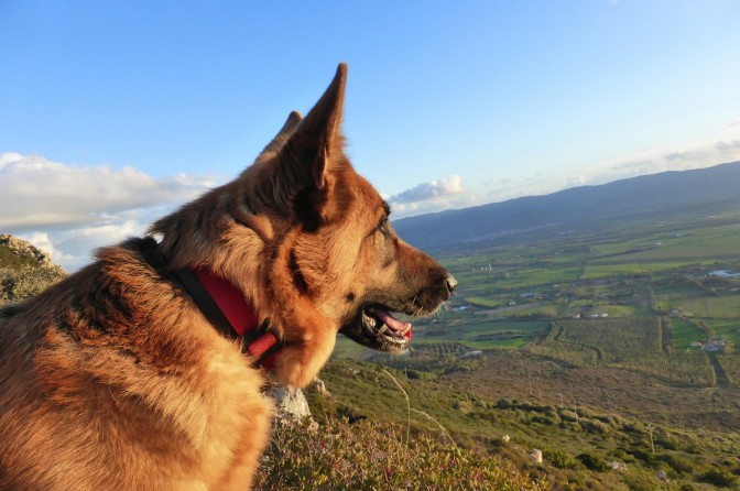 Trekking, Sardinia, Sardegna, mountain, dogs, holiday