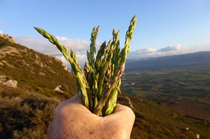Cooking, food, asparagus, trekking, Sardegna