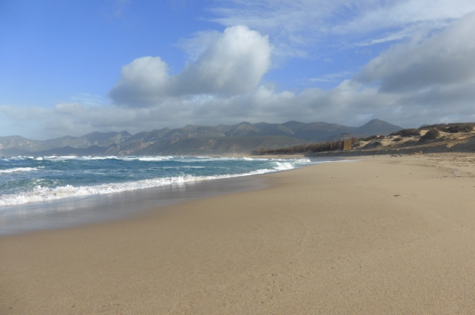 Beach, Sardegna, German shepherd