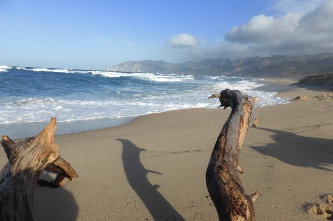 Beach, Sardegna, driftwood,