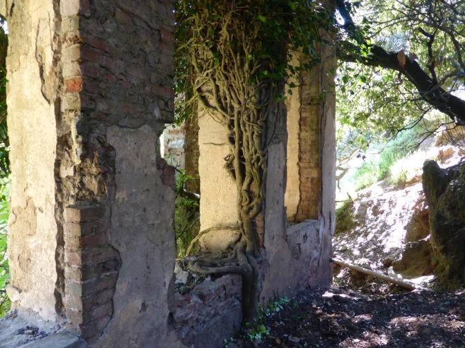 Tree, Sardegna