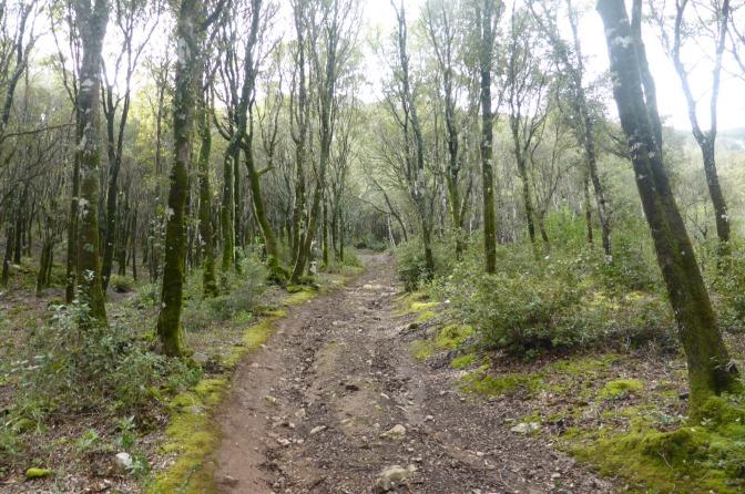 forest,travel,mountainbike,sardinia