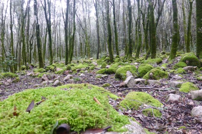 forest,marganai.mountainbiking,sardinia