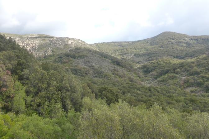 forest,travel,sardinia,mountainbiking