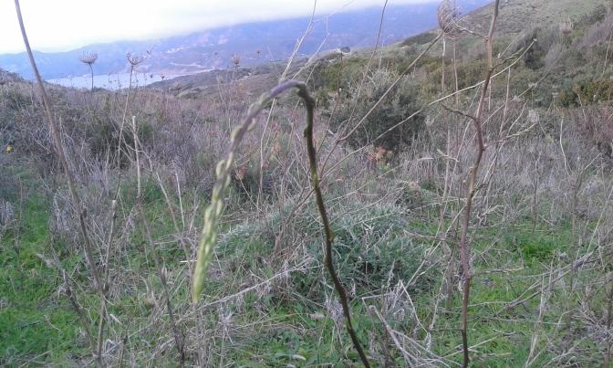 Asparagus, Sardegna, travel