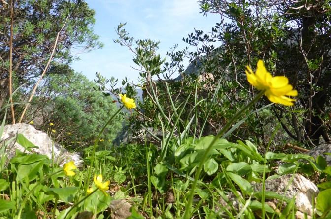 Sanbenedetto,flowers,trekkingcottage