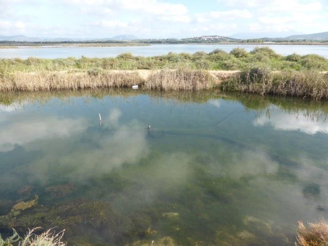 is solinas,lagoon,laguna,nature