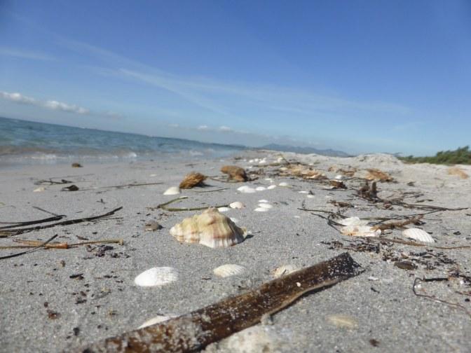 is solinas,beach,seashells,nature
