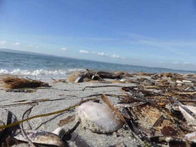 is solinas, beach, seashells,nature