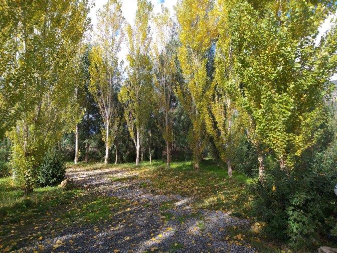 Seasons,sardegna,leaves