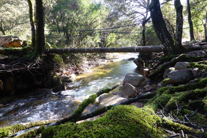 Forest,nature,sardegna