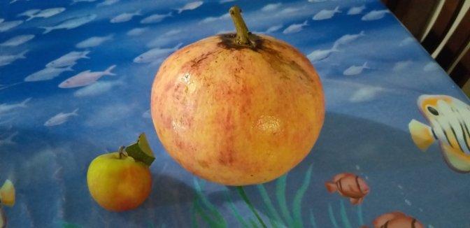 Pomegranate,wine, Sardegna